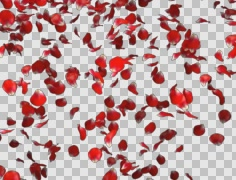 Red rose petals falling - stock footage