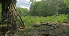 English woodland scene, Epping Forest Stock Footage