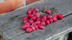 Red radish eco food vegetable - stock footage