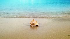 Seashell on sand ocean beach Stock Footage