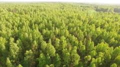 Top view on the green forest Stock Footage