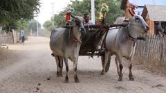 Decorated buffalo and local people on street, Bagan, Myanmar. Burma Stock Footage