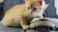 I Love You text and kitten - stock footage