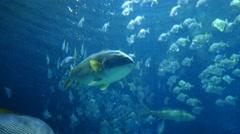 4k tropical exotic fish underwater sun rays aquarium clear water Stock Footage