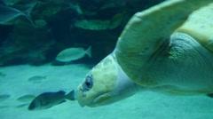 4k tropical exotic fish underwater sun rays aquarium clear water turtle tortoise Stock Footage