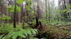 fern under drizzle in the wood - stock footage