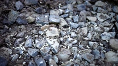 Ant Colony Relocates Stock Footage