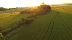 Flight over the wheat field in sunset Stock Footage