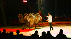 Coach and camels at a circus performance Stock Footage