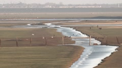 Birds Flock Together to the River Bank in the Field in Distance Stock Footage