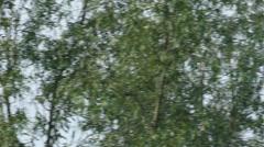 Grey Heron flying Stock Footage