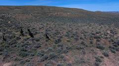Wild Mustangs Horse Wyoming aerial Stock Footage