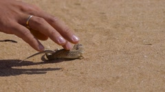 Man's hand caress two small lizards in desert Stock Footage