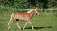 Horse Running Stock Footage