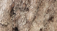 Trunk of an old olive tree Stock Footage