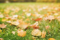 Fallen autumn leaves on the ground, fall season Kuvituskuvat