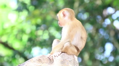 Cute and curious monkey sitting on the rock  Stock Footage