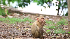 Monkey sitting on the ground. Stock Footage