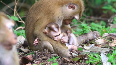 Mother and baby monkey . Stock Footage