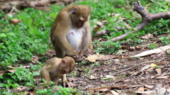 Monkey family. Stock Footage