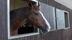 Brown Horse Standing In Stable Barn Stock Footage