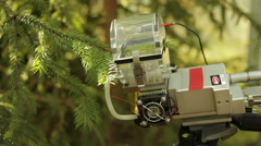 Research on photosynthesis in conifers, spruce, scientific study, science - stock footage