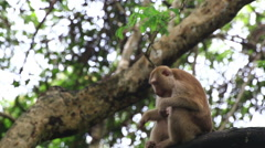 Monkey sitting on the tree. Stock Footage