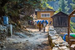 SAGARMATHA, NEPAL-APRIL 27: Donkeys on the hiking trail 27, 2016 in Sagarmath - stock photo