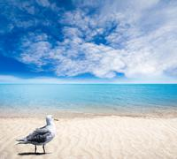 Seagull on Sandy Beach With Gentle Waves and Sunny Skies - stock photo