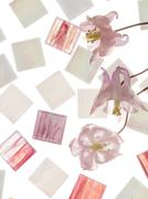 white and pink smalt and Aquilegia - stock photo