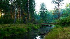 Fallen pine tree across the river in the morning mist Stock Footage