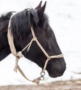 Portrait of a horse on nature in winter Stock Photos