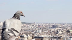 Panoramic view of Montmarte and Paris with bird on foreground - stock footage