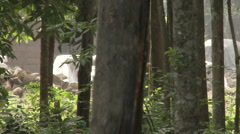Cameroon Pottery, camera following woman carrying baby, walked through forest Stock Footage