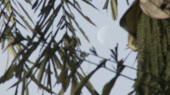 Cameroon, moon and weaver bird close up Stock Footage