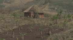 Cameroon, small hut with banana crop - stock footage