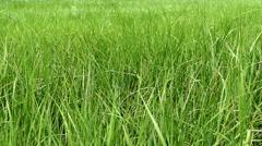Man crossing grass field - stock footage