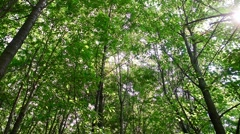 canopy of trees - stock footage