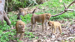 Monkey family. Stock Footage