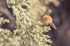 Bee Fly on Foliage Stock Photos