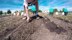 Elderly man planting vegetable garden in early Summer. Stock Footage