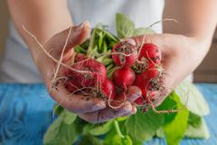bundle of bright fresh organic radishes with leaves on blue rustic table - stock photo