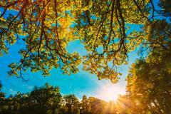 Sunset, sunrise in Summer Sunny Forest. Lens flare effect Stock Photos