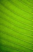 Fresh green leaf texture background Stock Photos
