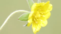 Yellow flower   by the wind Stock Footage