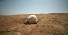 SKULL in the sand of a desert Stock Footage
