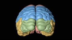 Animation of principal parts of a human brain represented for colours Stock Footage