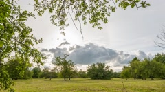 Summer Field timelapse footage. Nature landscape. Stock Footage