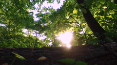 Walk in the evening summer forest. Make his way through the bushes. - stock footage