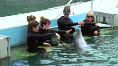 Tourists play with bottlenose dolphins  at Dolphin Quest attraction. Stock Footage